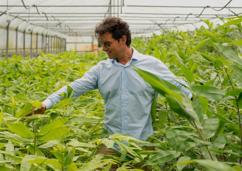 """Food, 2mila ettari di bambù per 800 aziende In Italia cresce il business dei """"giganti buoni"""" e sbarca nella GDO"""