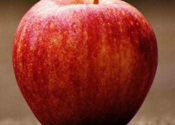 AVD REFORM - colesterolo