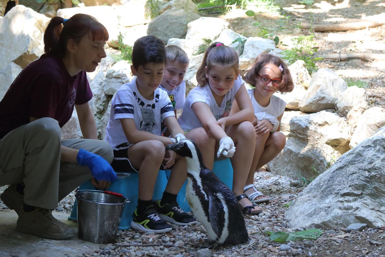 pinguini zoo pistoia