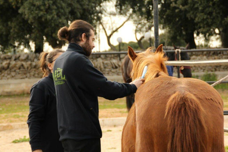 Il Moro di Puglia: i cavalli un aiuto prezioso nella cura