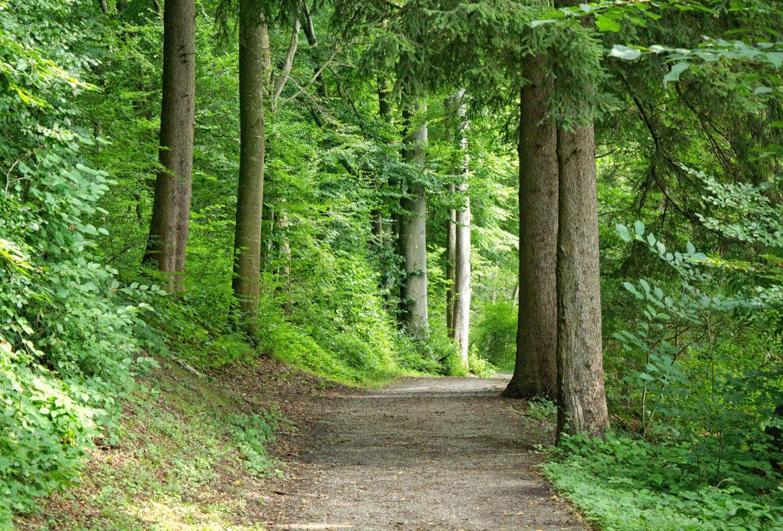 comparto forestale