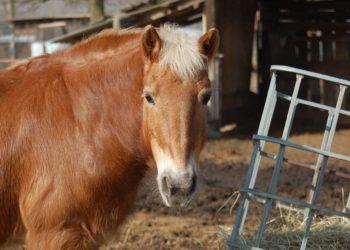 fiera cavallo
