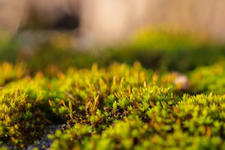 consumo suolo