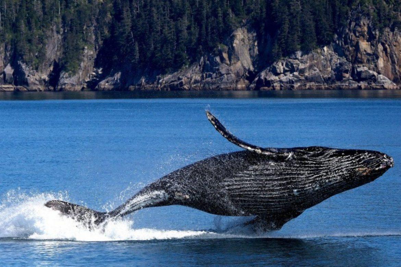 Santuario dei Cetacei