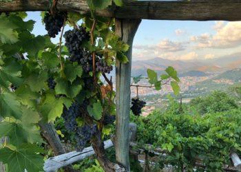 Vini Iovine (NA)