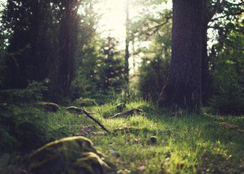 patrimonio boschivo