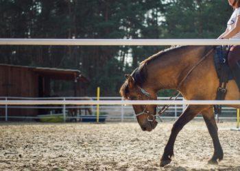 comparto equestre