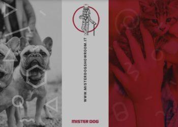 Mister Dog Bari