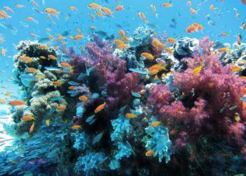 pesca del corallo