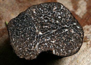 tartufo sardo